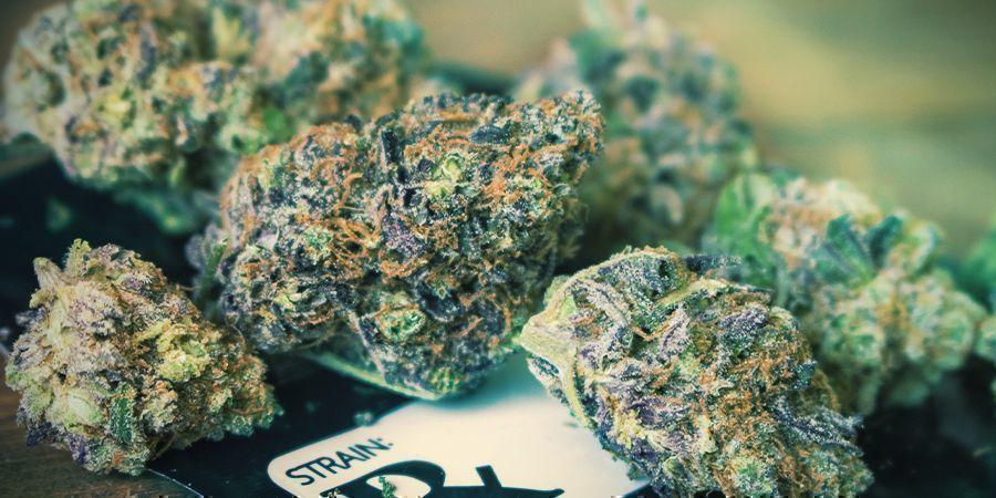 Las Autoflorecientes Marihuana Producen Menores Cosechas