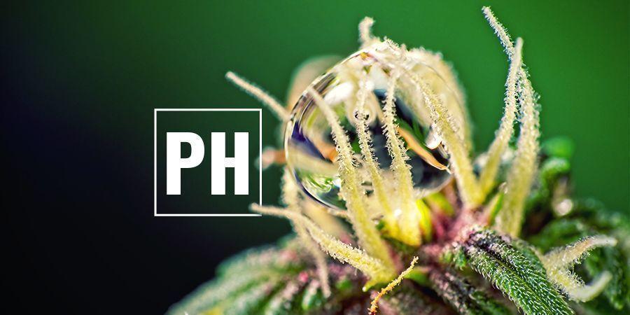 Optimizar Cannabis Los Niveles De PH