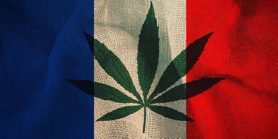 Francia y El Cannabis: El Plan Del Comité