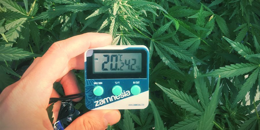 Niveles Óptimos De Humedad Para Las Plantas De Marihuana