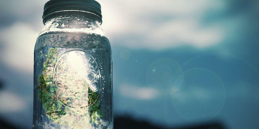 Cómo Hacer Sal De Marihuana: Elaboración Paso A Paso