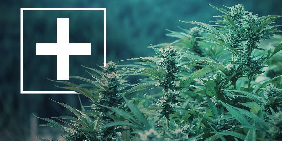 Ventajas De Las Variedades De Marihuana De Floración Rápida