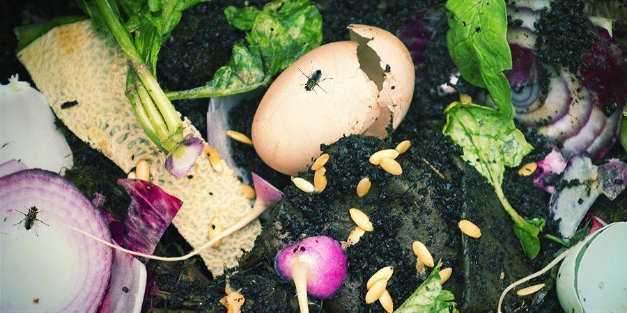 Infestaciones De Moscas Compost
