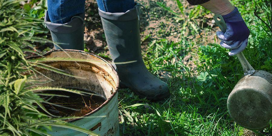 Cómo Usar Compost Casero Para Tu Cultivo De Marihuana