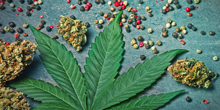 Beta-Cariofileno En Cannabis