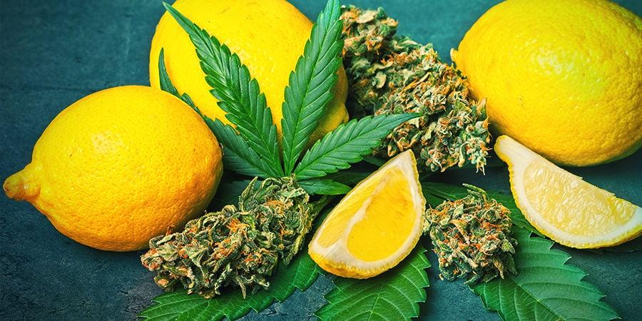Limoneno En Cannabis