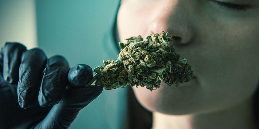 Por Qué Son Importantes Los Terpenos De La Marihuana