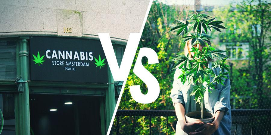 Cómo Conseguir Cannabis