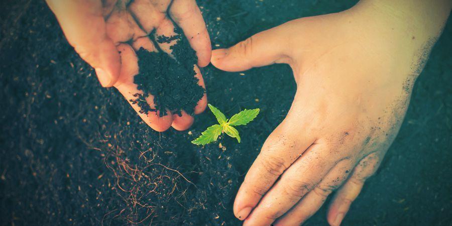 Monta El Lecho De Cultivo Con Zona Doble De Raíz