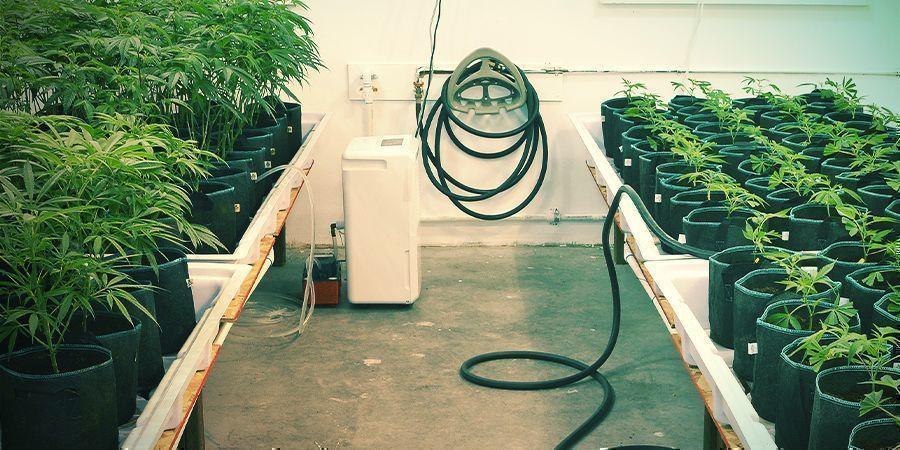 Mantenlo Todo Limpio - Cultivo Vertical De Marihuana