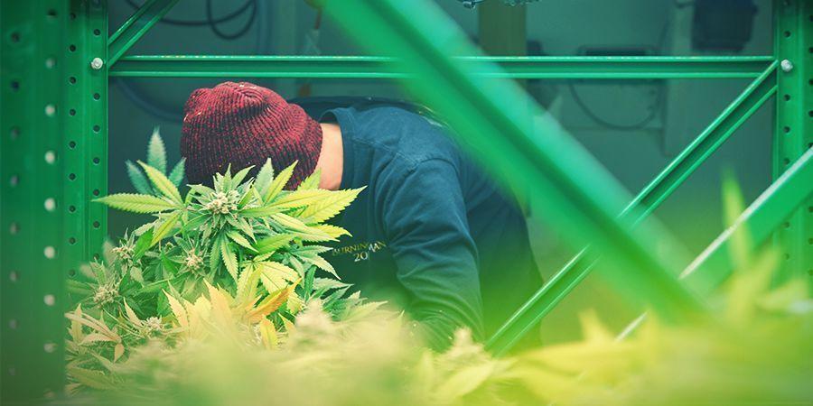 Sistema De Estantes - Cultivo Vertical De Marihuana