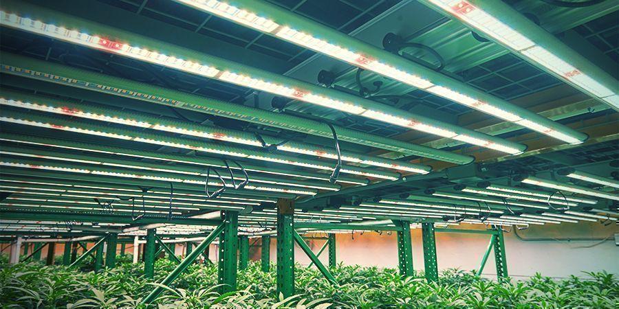 El Cultivo Vertical De Cannabis