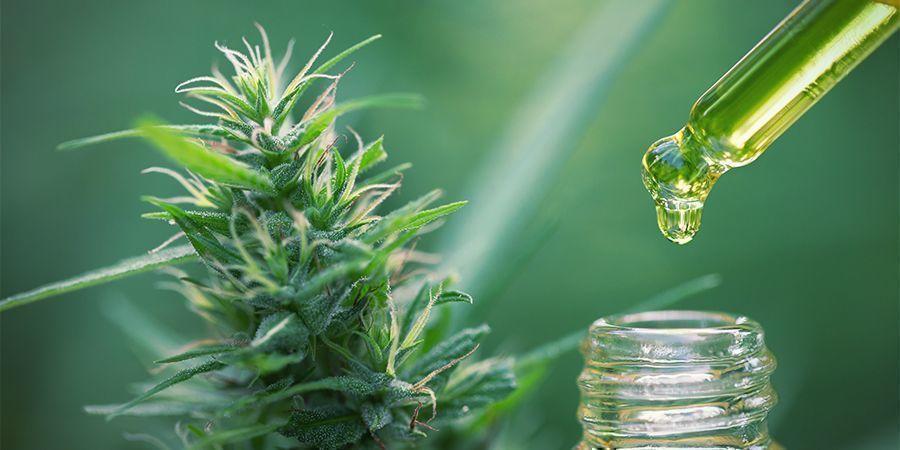 Comestibles Concentrados De Cannabis: Calcula La Dosis Correcta