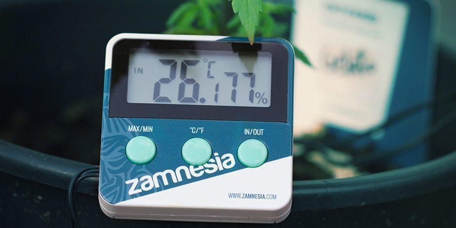 Factores Que Pueden Afectar A La Floración Del Cannabis: Temperatura Ambiente