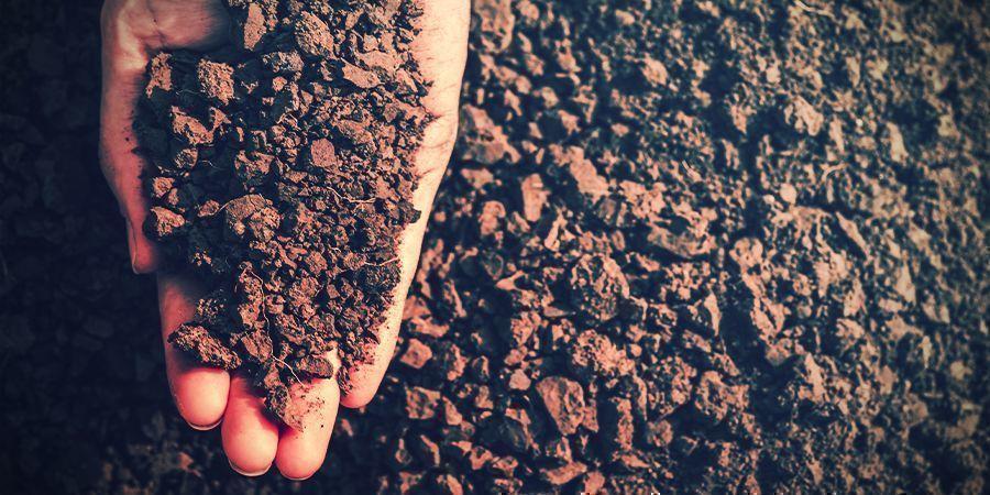 Factores Que Pueden Afectar A La Floración Del Cannabis: Sequía