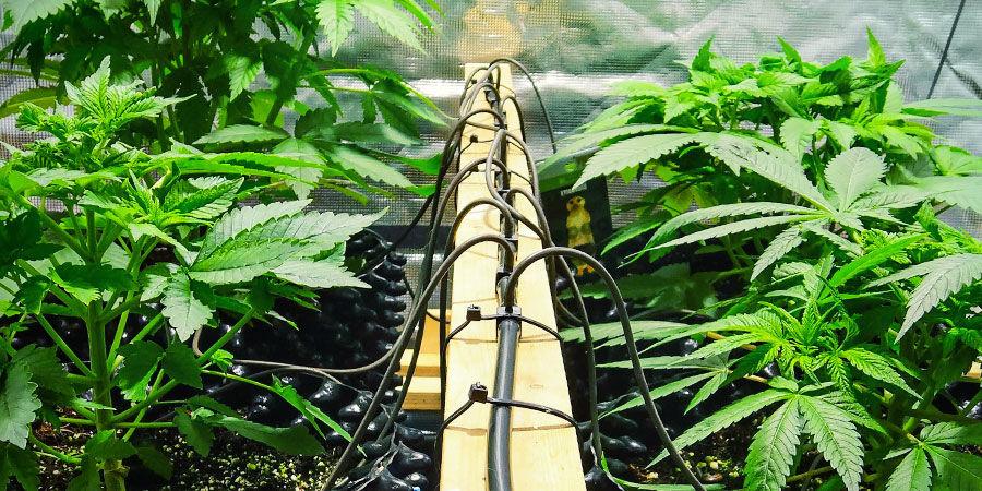 Opciones Comerciales - Sistema De Irrigación