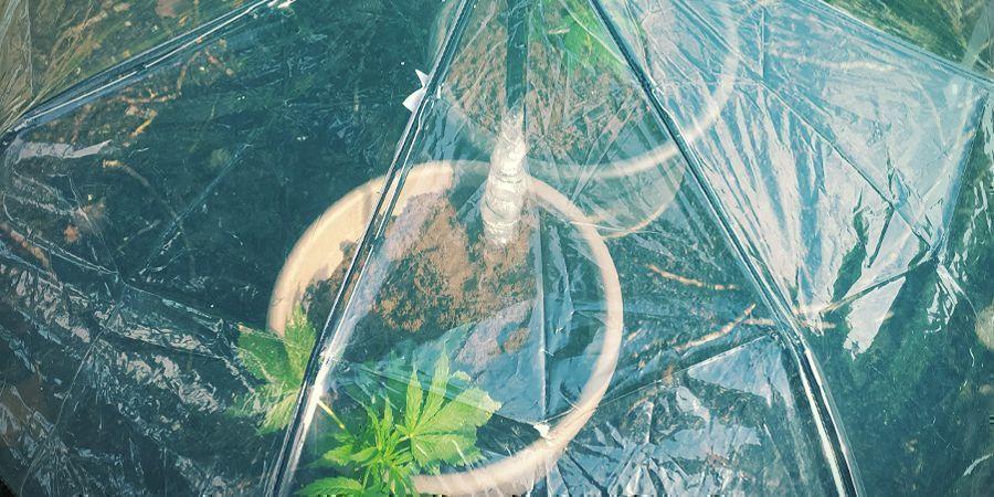 5 Métodos Caseros: Regar Tus Plantas De Marihuana