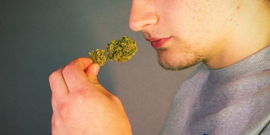 Detectar Los Contaminantes De La Marihuana: Huele Y Prueba Tu Hierba Antes De Fumarla