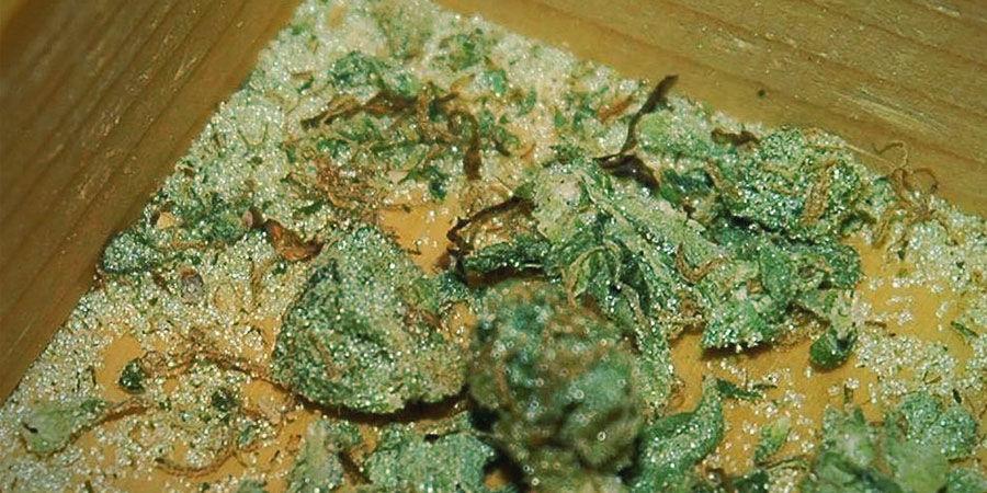 Tipos De Contaminantes Del Cannabis: Cristal