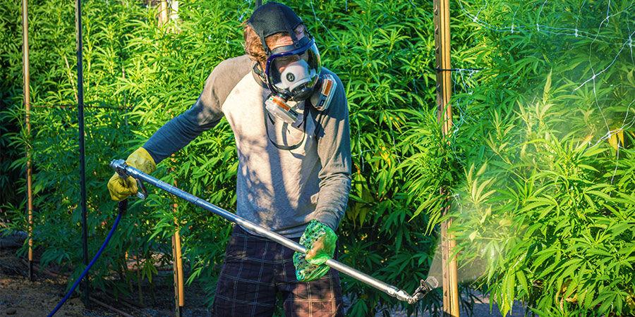 Tipos De Contaminantes Del Cannabis: Pesticidas Y Fertilizantes Industriales