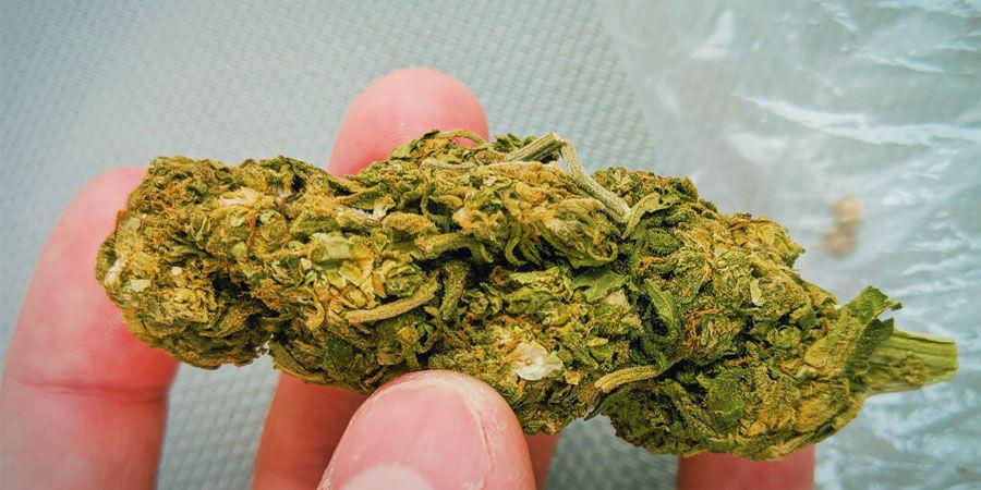Tipos De Contaminantes Del Cannabis: Arena