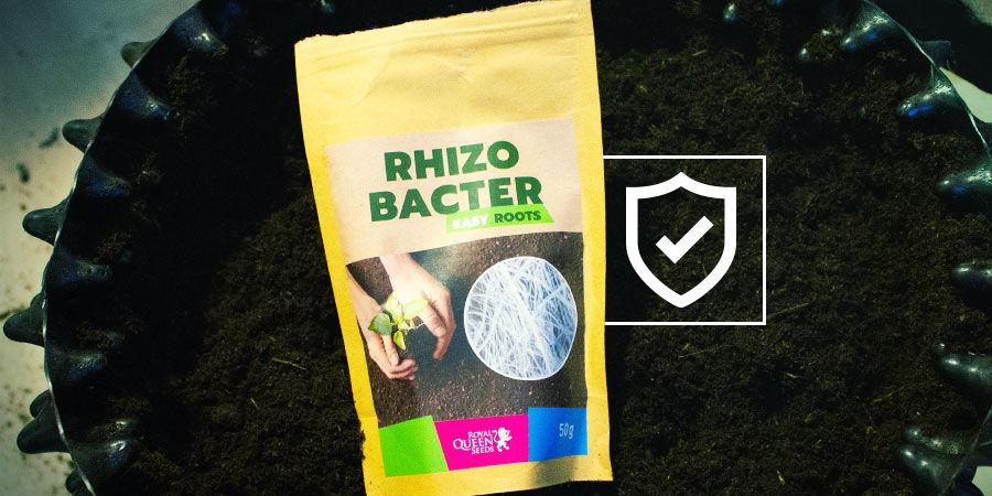 ¿Cómo Protegen Las Rizobacterias A Las Plantas De Marihuana?