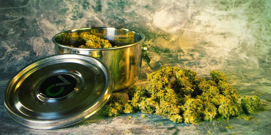 ¿Qué Se Necesita Después De Cosechar La Marihuana?