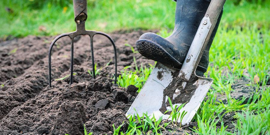 Cultivar Pimientos Para Principiantes: Prepara Lugar Cultivo