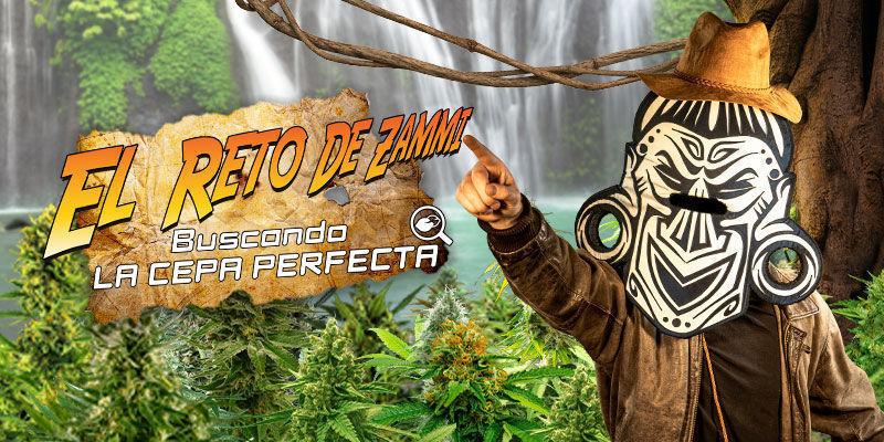 Buscador De Semillas De Marihuana