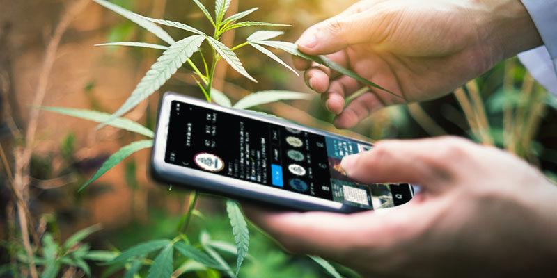 Sigue Las Cuentas Que Analizan El Sector De La Marihuana En Las Redes Sociales