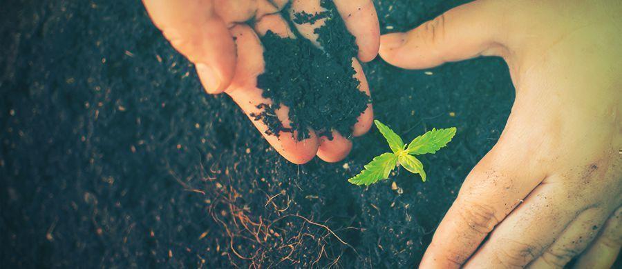 r/cannabiscultivation: Todo Lo Que Necesitas Saber Sobre El Cultivo, En Un Solo Lugar