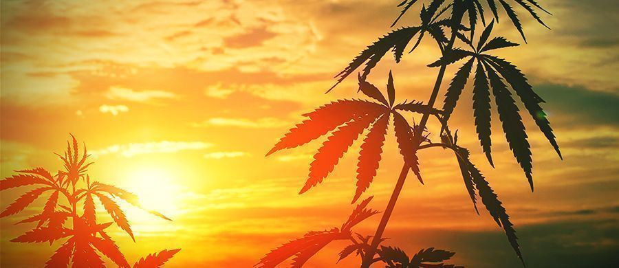 r/outdoorgrowing: Para Cultivar Al Aire Libre