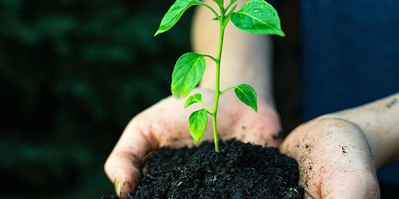 Cultivo De Jalapeños: Utensilios