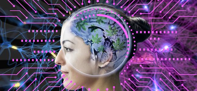 el cannabis sí influye en la neurogenia