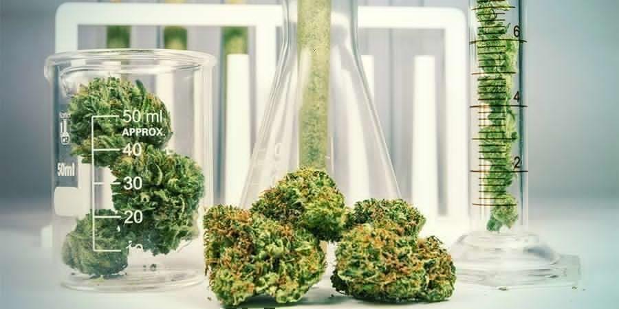 Marihuana: Una Hierba Con Una Química Compleja