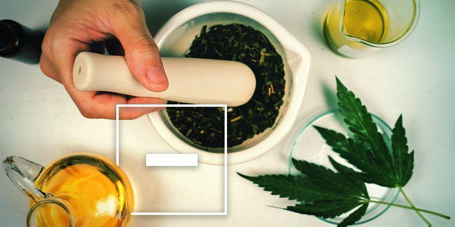 Desventajas Del Aceite De Oliva Con Cannabis