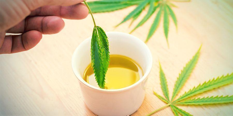 ¿Qué Es El Aceite De Oliva Con Cannabis?