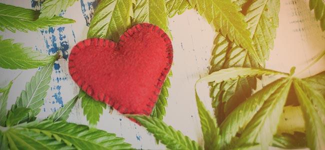 Por qué cultivar tu propia hierba: Una Relación Con La Planta