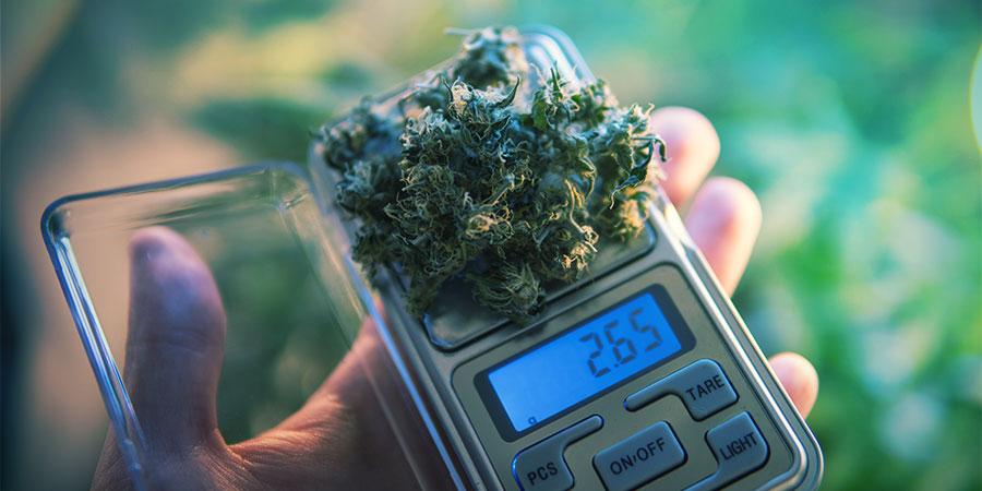 Dosificar Comestibles De Cannabis Es Una Habilidad En Sí Misma