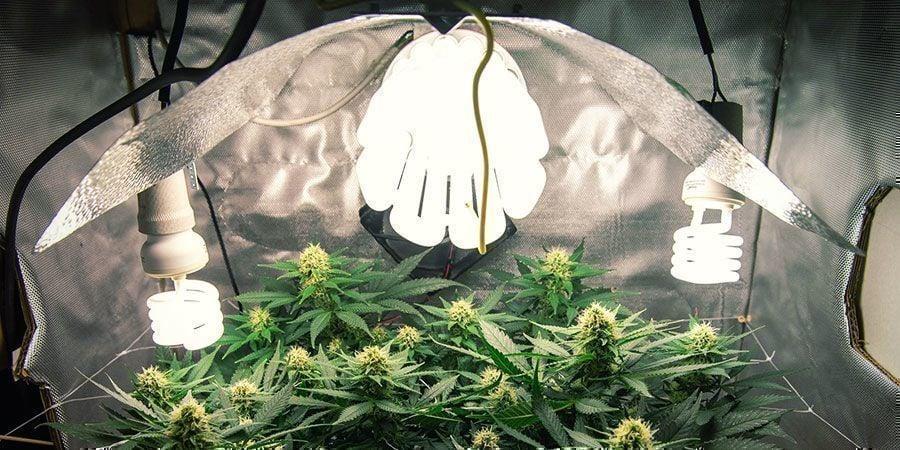 Luces CFL/T5 - Plantas De Marihuana
