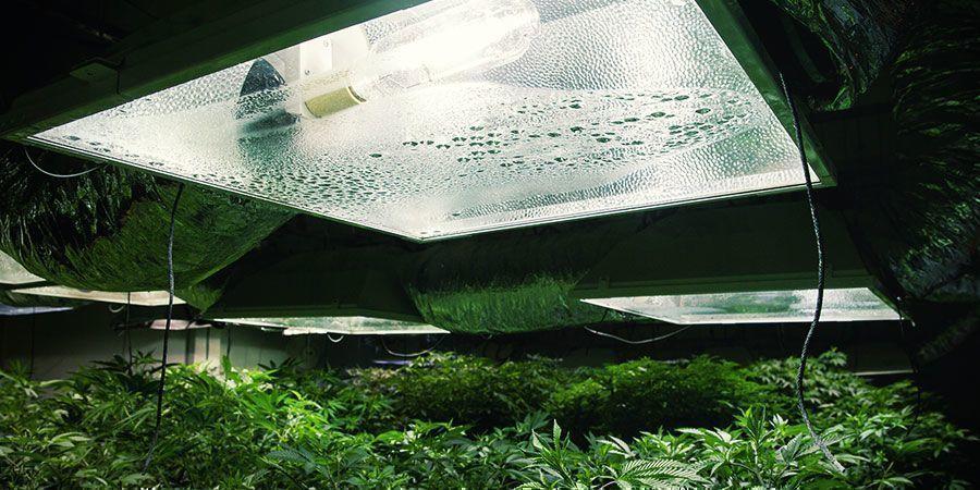 Comprueba El Equipo - Plantas De Marihuana