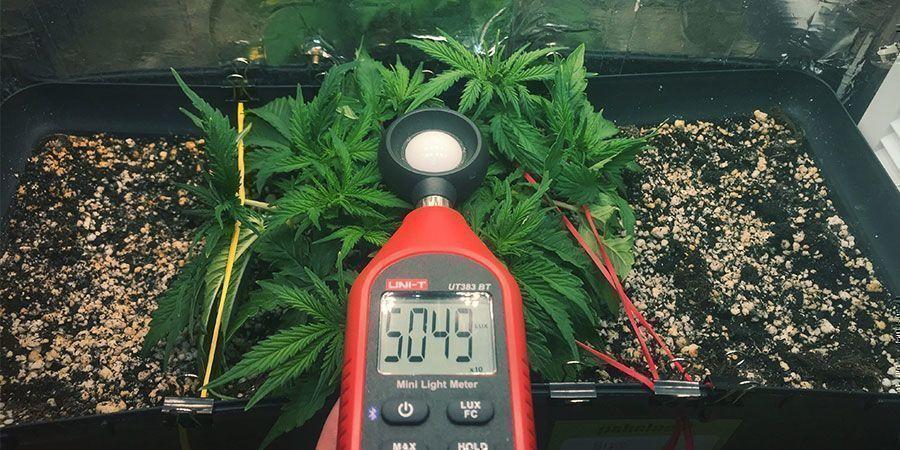 Utiliza Un Luxómetro O Un Medidor PAR - Plantas De Marihuana