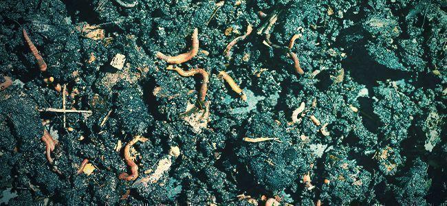 ¿Qué Son Los Fertilizantes Orgánicos?