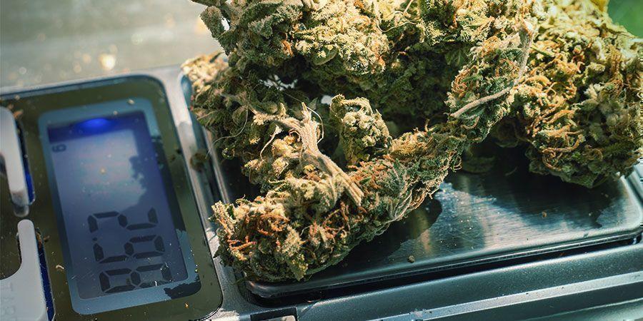 Aliviar La Tensión Con Marihuana: Prueba Diferentes Dosis