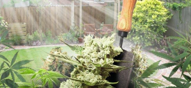 Cultivo En Patios O Jardines