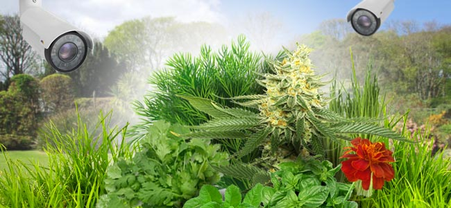 Consejos Para Cultivadores De Jardín