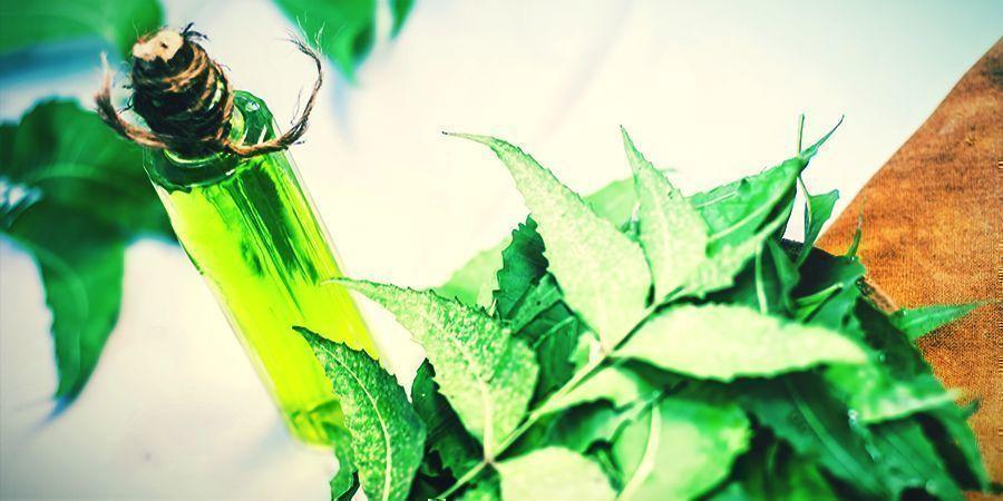 Aceite De Neem - esprays foliares para las plantas de cannabis