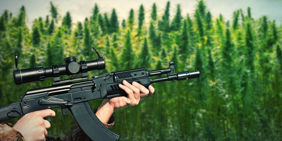 CÓMO CULTIVAR LA AK-47