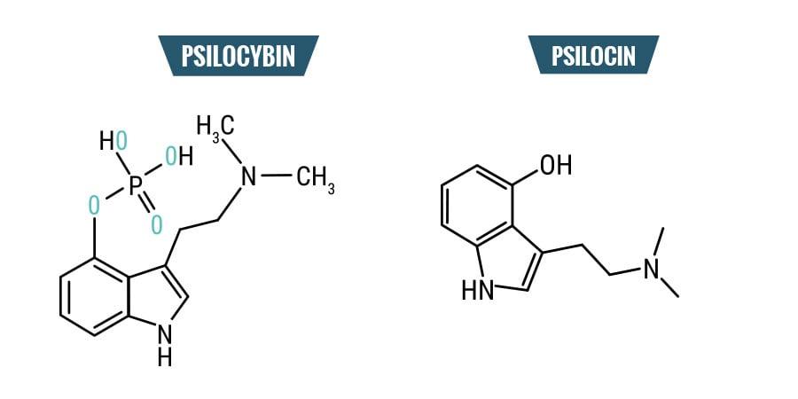Psilocibina vs. Psilocina