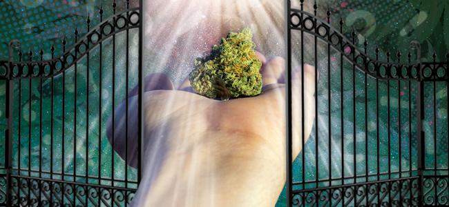 La Marihuana Es Una Puerta De Acceso A Otras Drogas